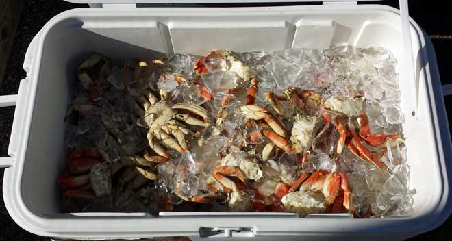 Crab kept on ice for 24 hours, Behind: too busy to talk