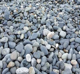 The pebbles are the reason the Orcas visit this beach